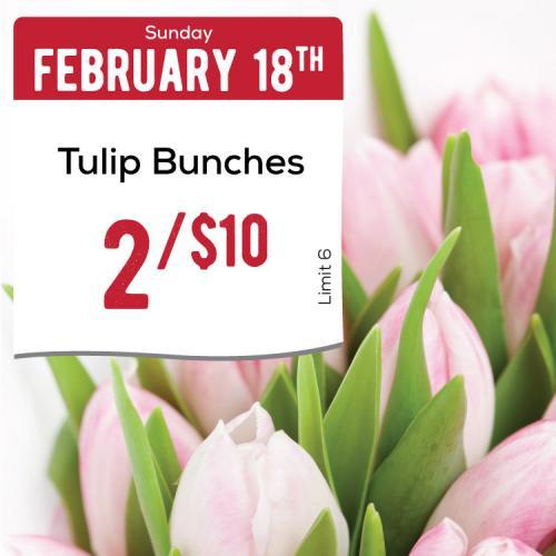 02-18-Tulips