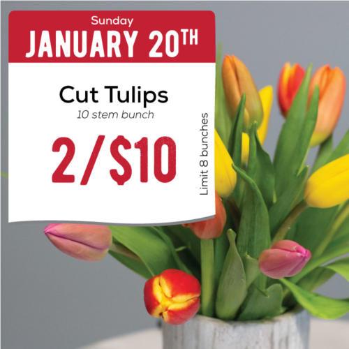01-20-tulips