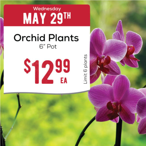 05-29-orchids